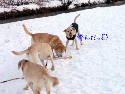 maru1_20101225002927.jpg