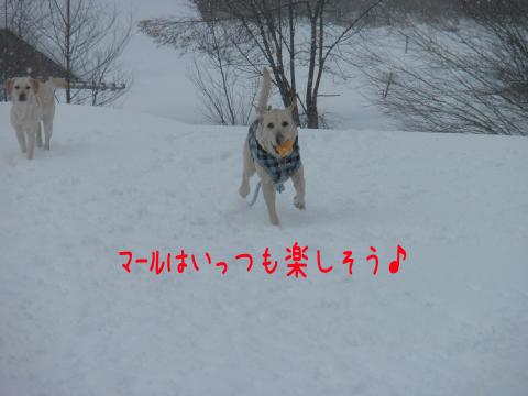 maru_20110207220920.jpg