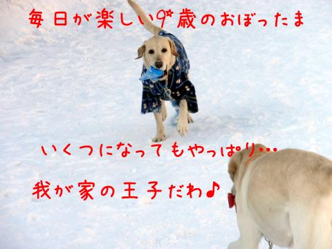 maru_20110228220605.jpg