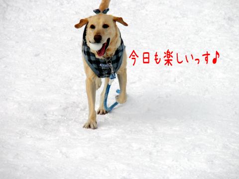 maru_20110305181448.jpg