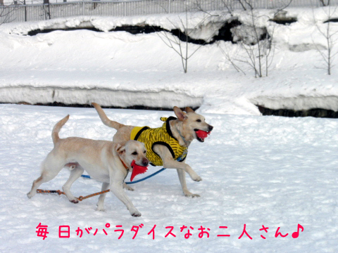 marudai_20110306225541.jpg
