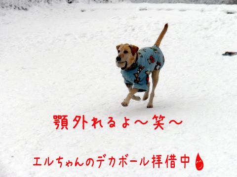 maruhasiru_20101226195725.jpg