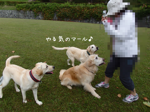 maruhasiru_20140911085626c1a.jpg