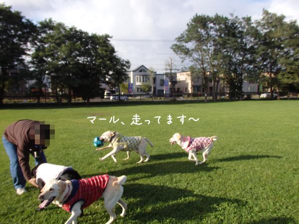 maruhasiru_20140919220115d0b.jpg