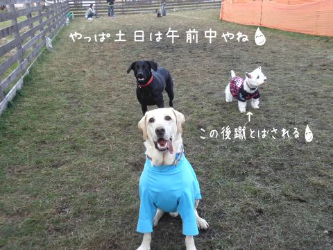 maruhihumi_20101113184641.jpg