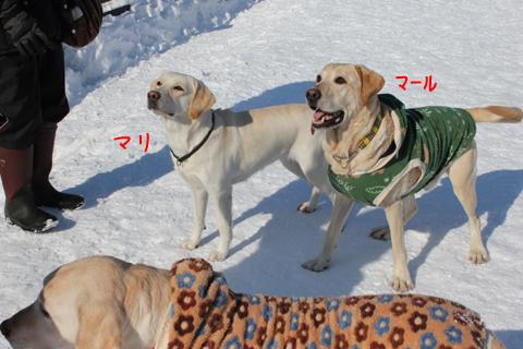 marumari_20110211221906.jpg