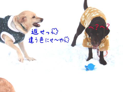 maruokoru_20101225002927.jpg