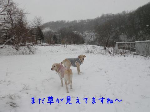 marusyeri_20101216205644.jpg