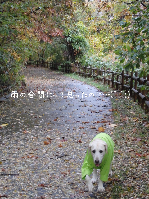 miya1_20141017211350d98.jpg