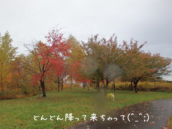miya2_20141017211351398.jpg