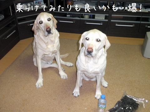 noke_20110221184657.jpg