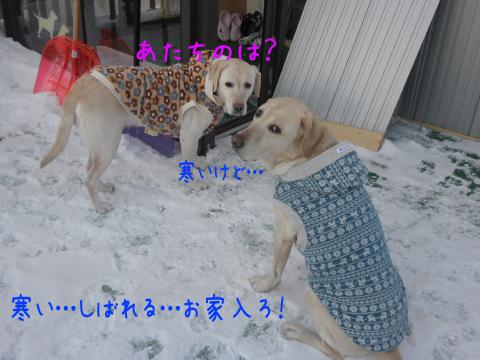 norude2_20110114210426.jpg