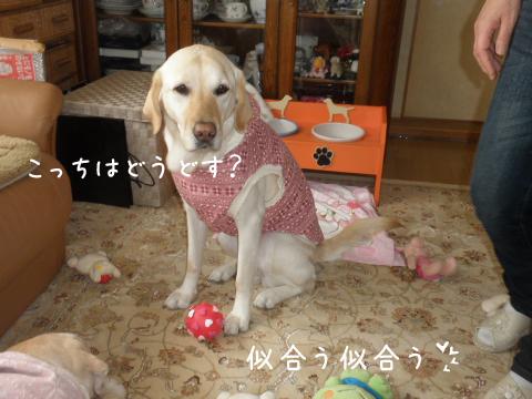norude_20110129023110.jpg