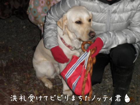 notei_20101128212058.jpg