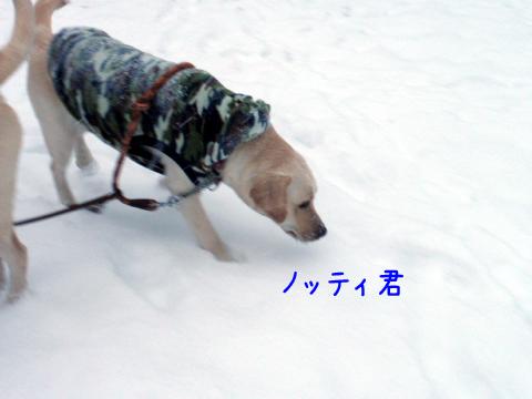 notei_20101216205643.jpg