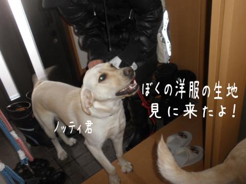 notei_20110218212746.jpg
