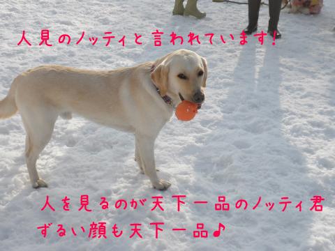 notei_20110306225540.jpg