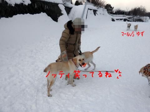 nothi1.jpg