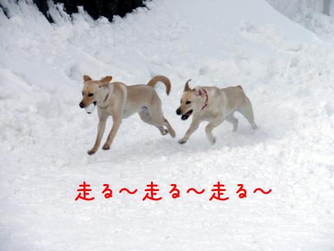 papi1_20110305181447.jpg