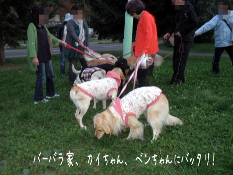 sanpo_20101003183359.jpg
