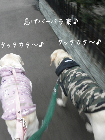 sanpo_20101207225854.jpg