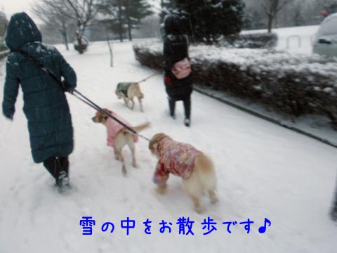 sanpo_20101216205643.jpg
