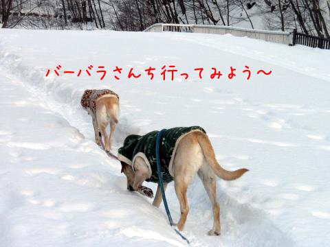 sanpo_20110127220039.jpg
