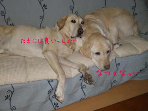 sofa1_20110110210847.jpg