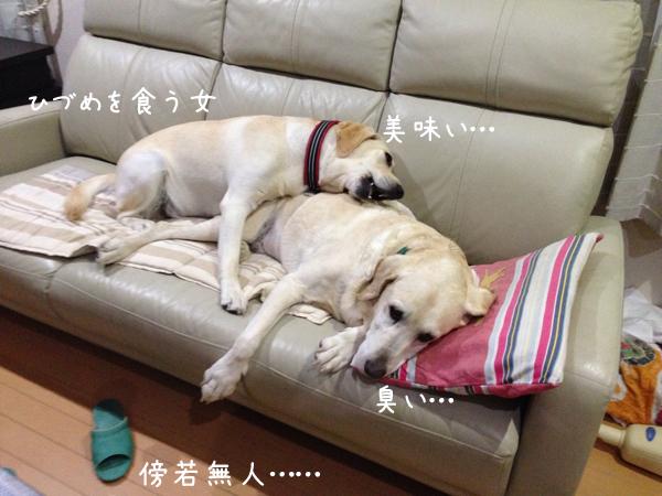 sofa3_20140911085630508.jpg