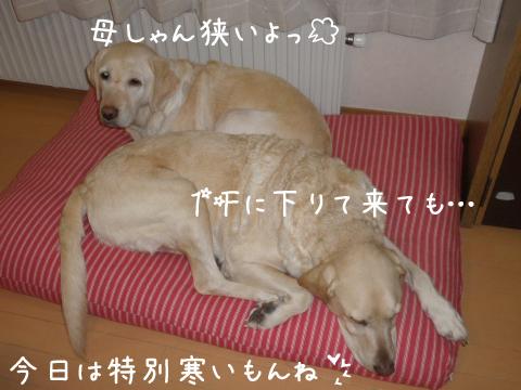 sofa4sita.jpg