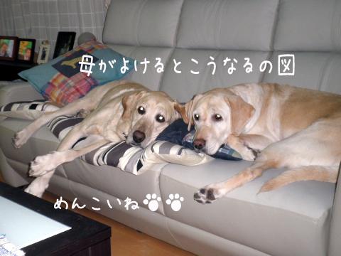 sofa_20110202220510.jpg