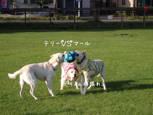 terimaru_20140919220417e34.jpg