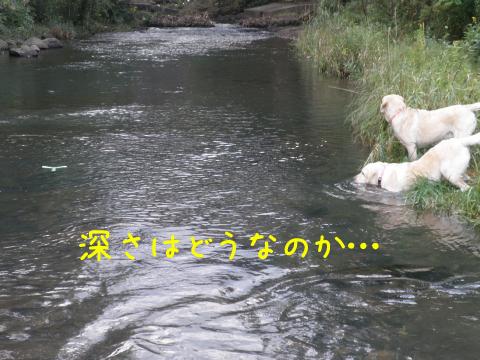 ue1_20100901223536.jpg
