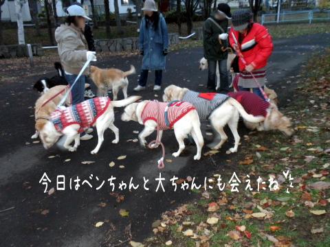 warawara_20101114190359.jpg