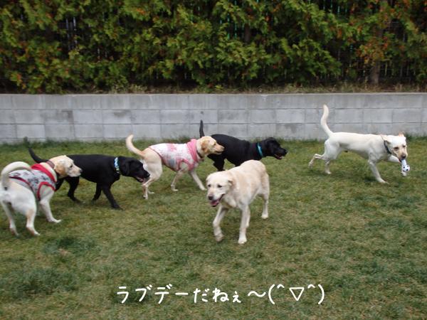 warawara_2014100821360237a.jpg