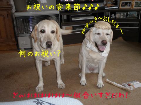 yasuki1.jpg