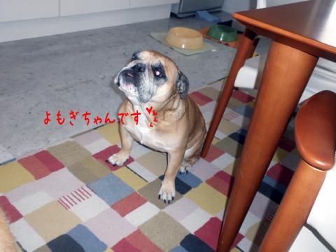 yomogi.jpg