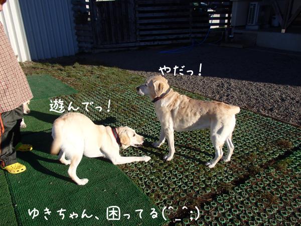 yuki3_20141015231251c6e.jpg