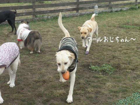 yumemaru1.jpg
