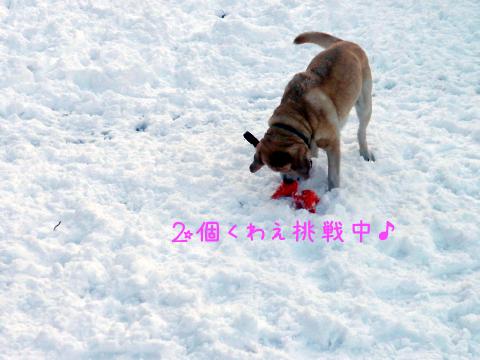 yuzu2ko.jpg