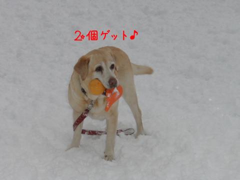 yuzu2ko_20101230234702.jpg