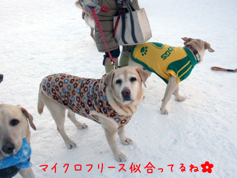 yuzu_20110104211324.jpg
