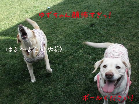 yuzuhoeru.jpg