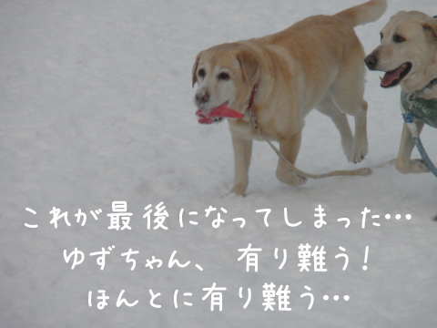 yuzumaru_20110131135348.jpg