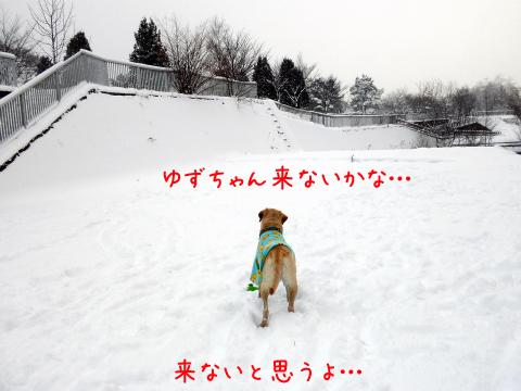 yuzumati.jpg