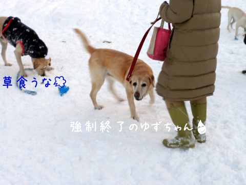 yuzutukamaru.jpg