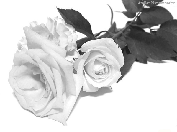 rose02mo.jpg