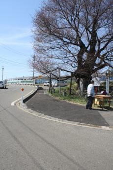 千歳桜根元の歩道を高機能舗装化(22.夏)