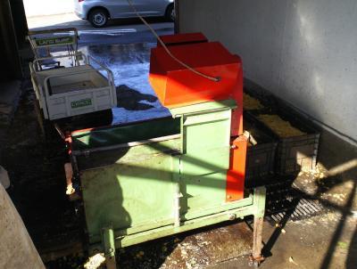 銀杏を洗う機械(24.10.16)