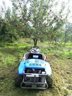 リンゴ畑を草刈り(24.10.29)
